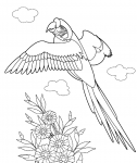 Пелікан