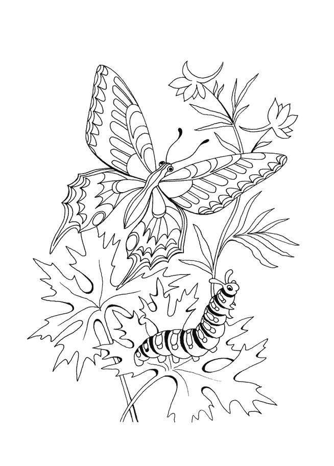 Метелик Розмальовки Розмальовки Метелики